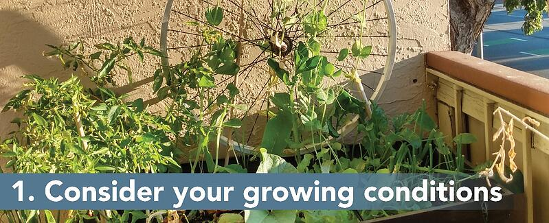 1. Consider your growing conditions.