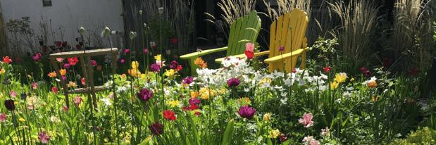 10 - Drought Tolerant Pollinator Yard