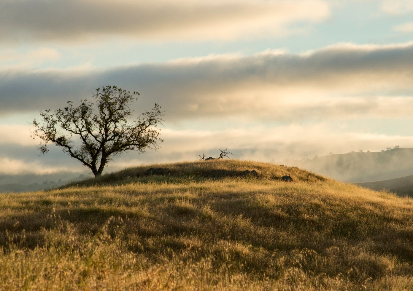Lone oak tree on top of grassy covered hill under cloudy sky