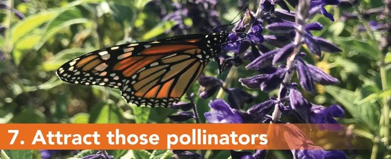 7. Attract those pollinators
