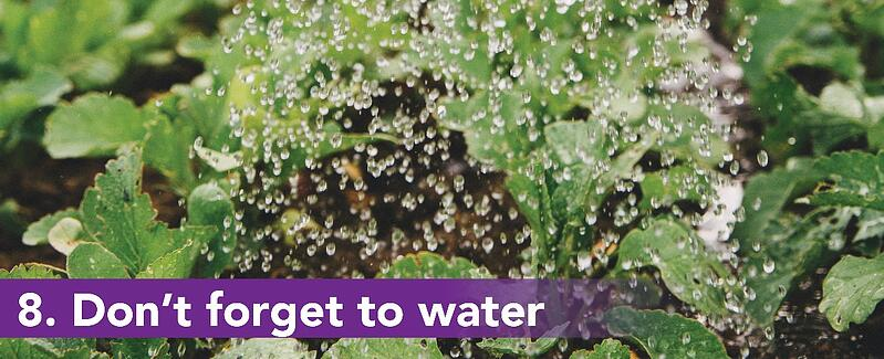 8. Don't forget to water