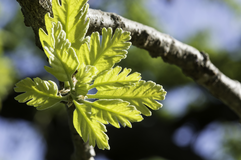 CVAL - Wildflowers - D.Neumann - 02-26-15 - 5