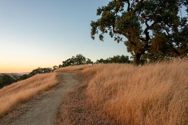 Coyote Valley OSP - Arrowhead Loop Trail_D Neumann-6