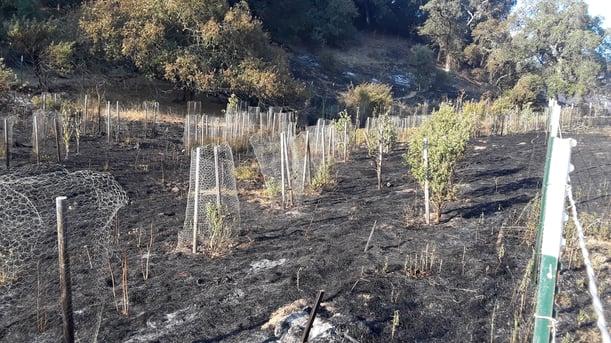 DFOO - Burned Areas - M.Robinson - 2020-07 - 3
