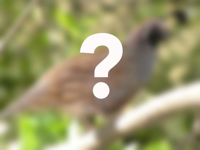 Kim quail question