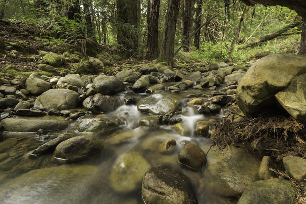 Rushing stream in redwood forest