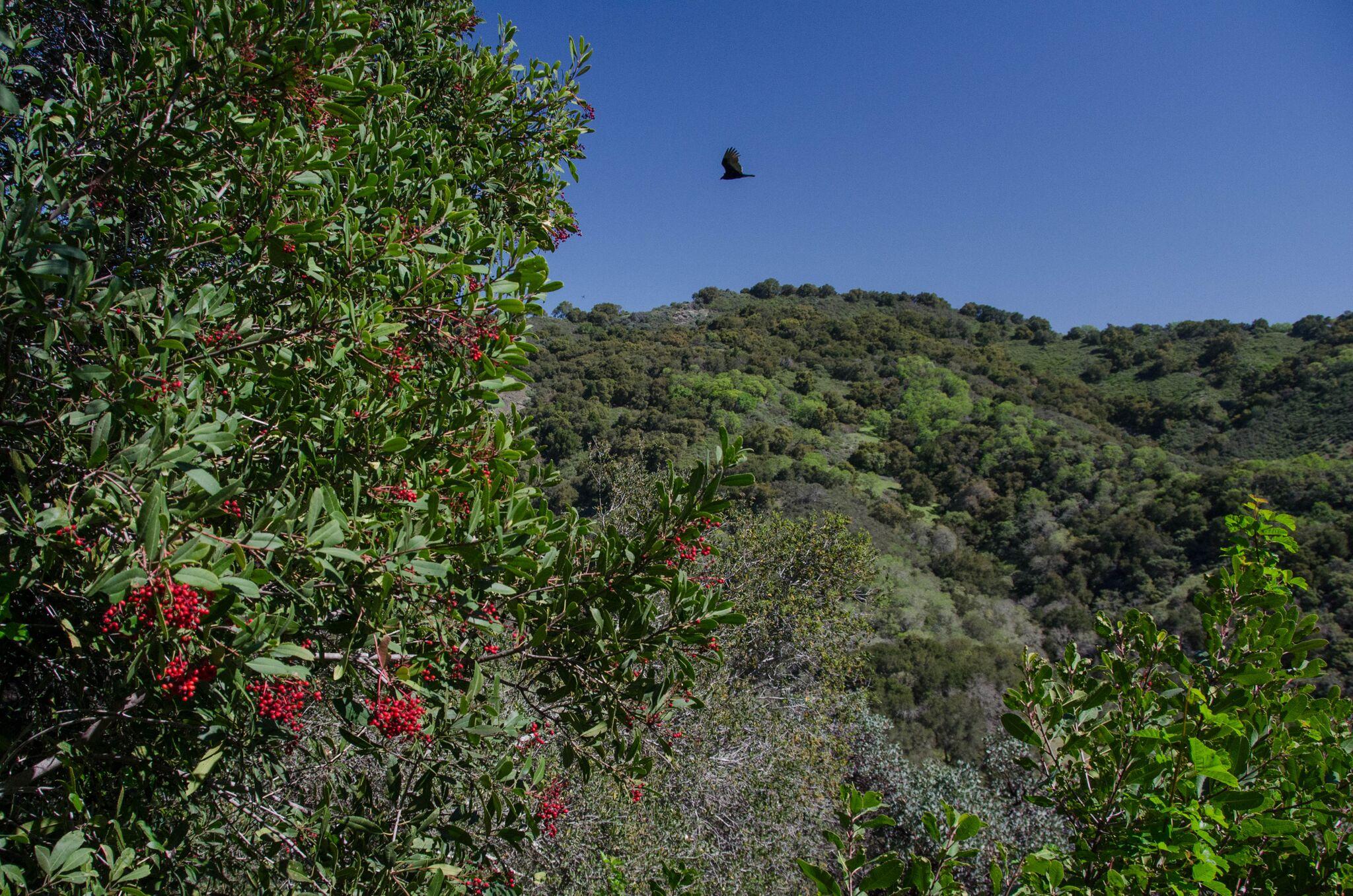 Mayfair-Trail_Rancho-Canada-del-Oro-Open-Space-Preserve_Cassie-Kifer-10_preview