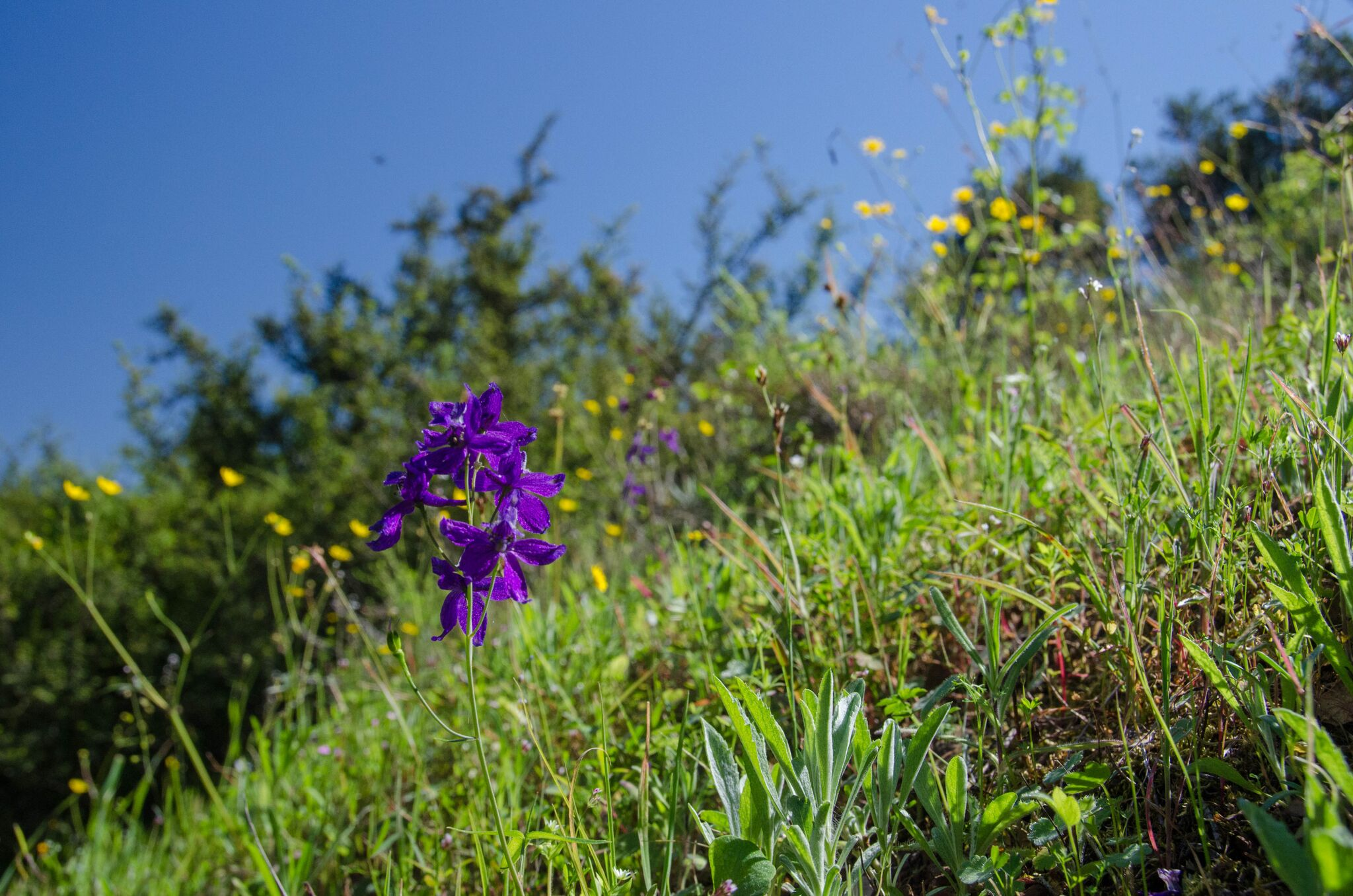 Mayfair-Trail_Rancho-Canada-del-Oro-Open-Space-Preserve_Cassie-Kifer-14_preview