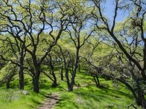 Mayfair-Trail_Rancho-Canada-del-Oro-Open-Space-Preserve_Cassie-Kifer-22_preview-788021-edited