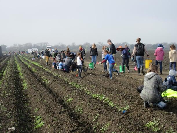 NPRAP - STRAW Hedgerow Planting - S.Earnshaw - 01-31-2020 - 1