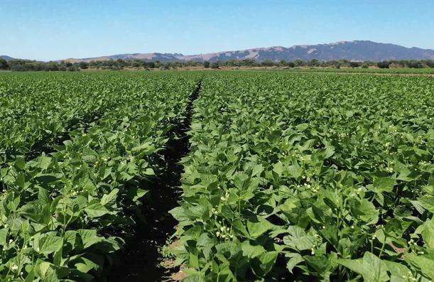 PRAP row crops