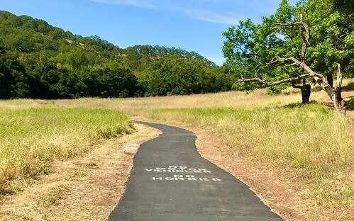 Paved trail going into grassy field under blue sky