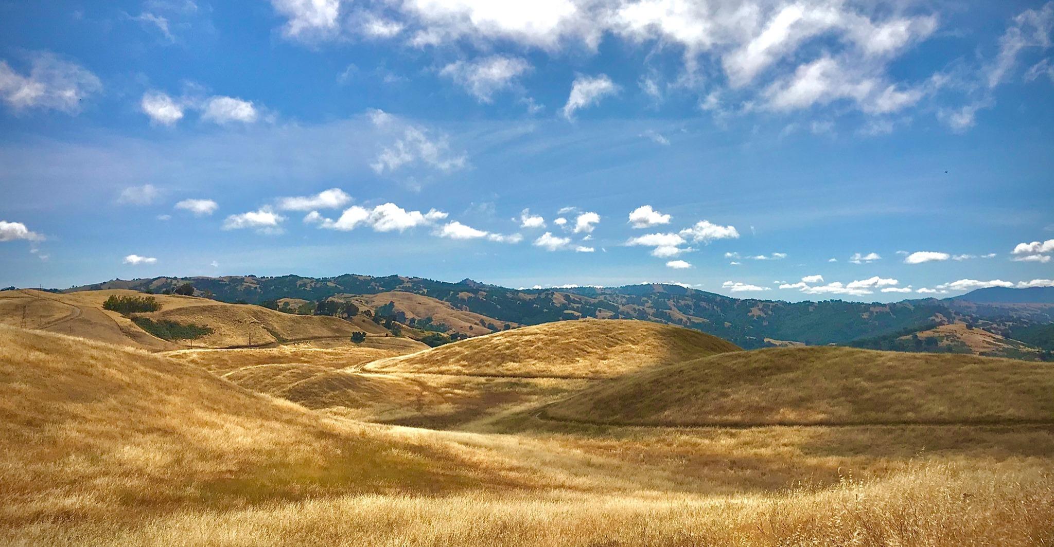 Rolling golden hills under blue sky