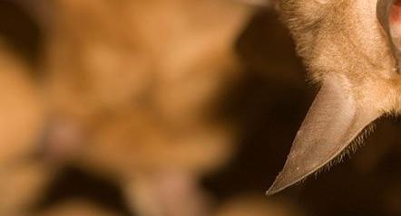 bats-960x540-791442-edited