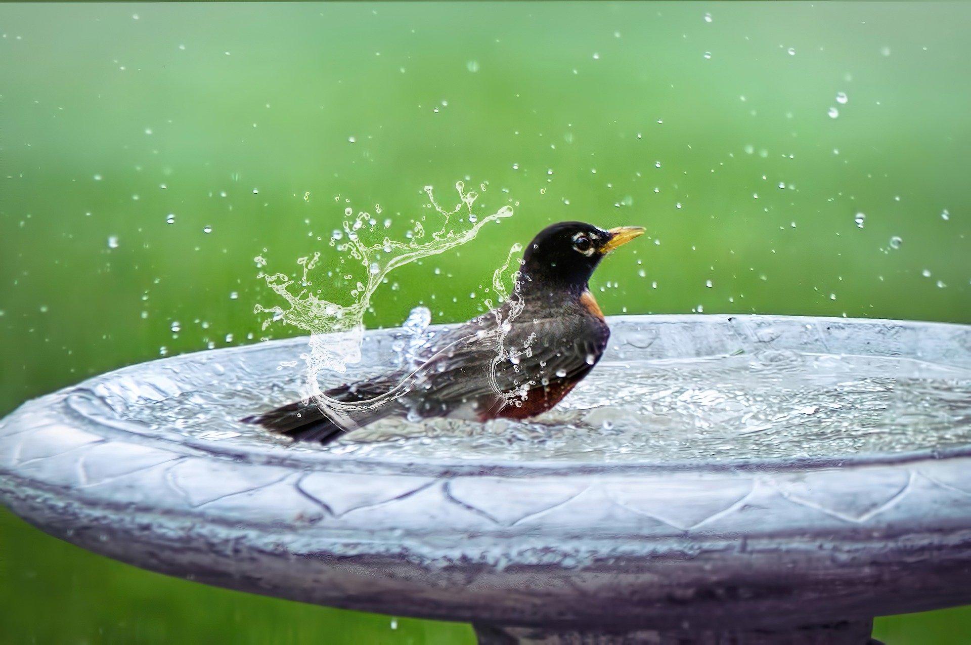 bird-bath-5290285_1920