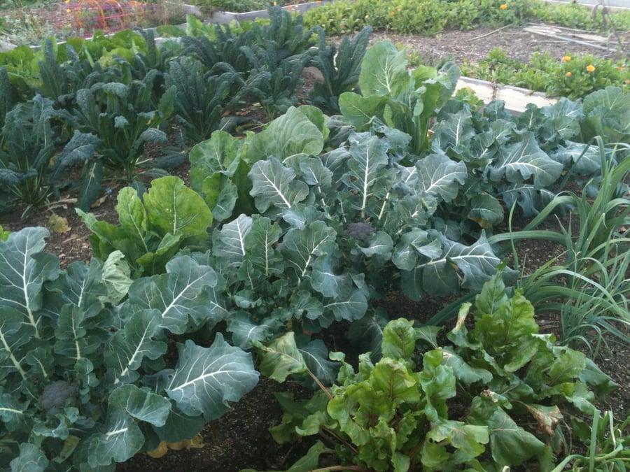 Morgan Hill Community Garden