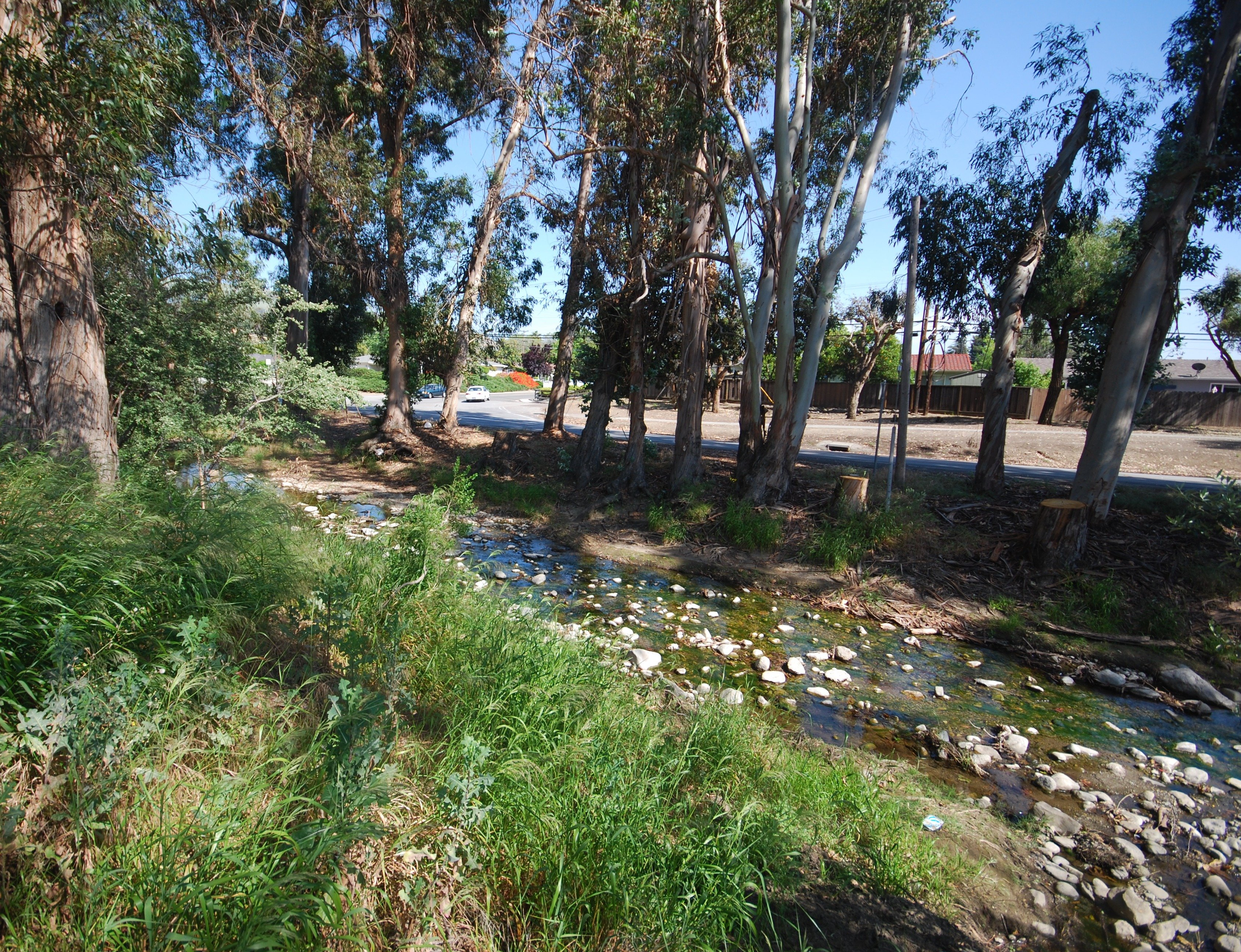 penitencia creek trail