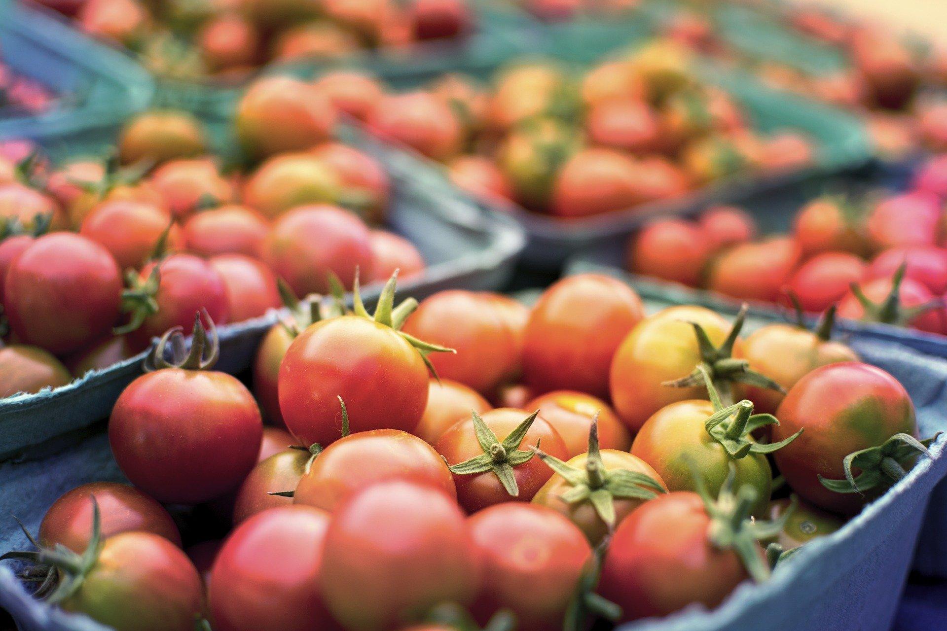 tomato-2556426_1920