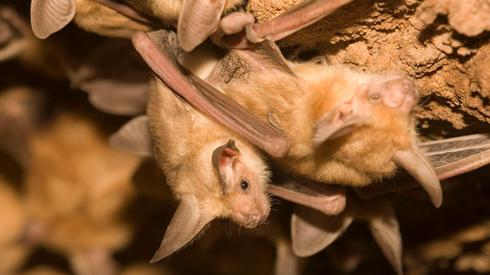 bats-960x540